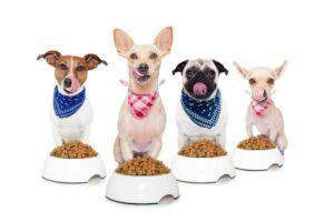 Ranking suchych karm dla psów